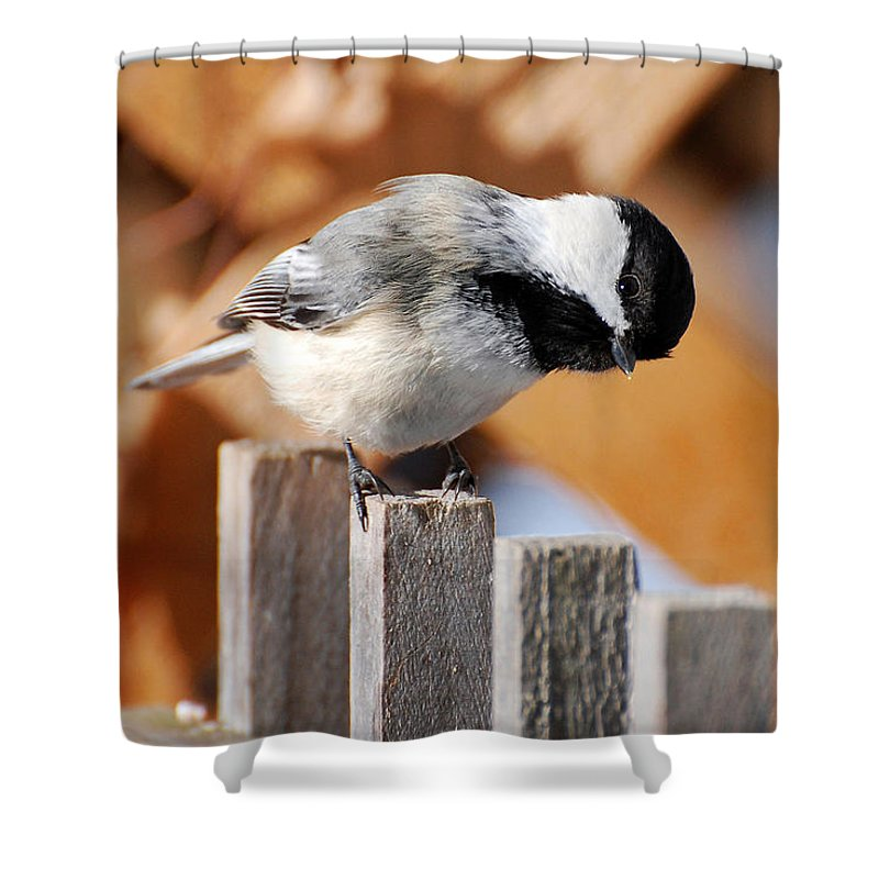 Bird Shower Curtain featuring the photograph Curious Chickadee by Christina Rollo