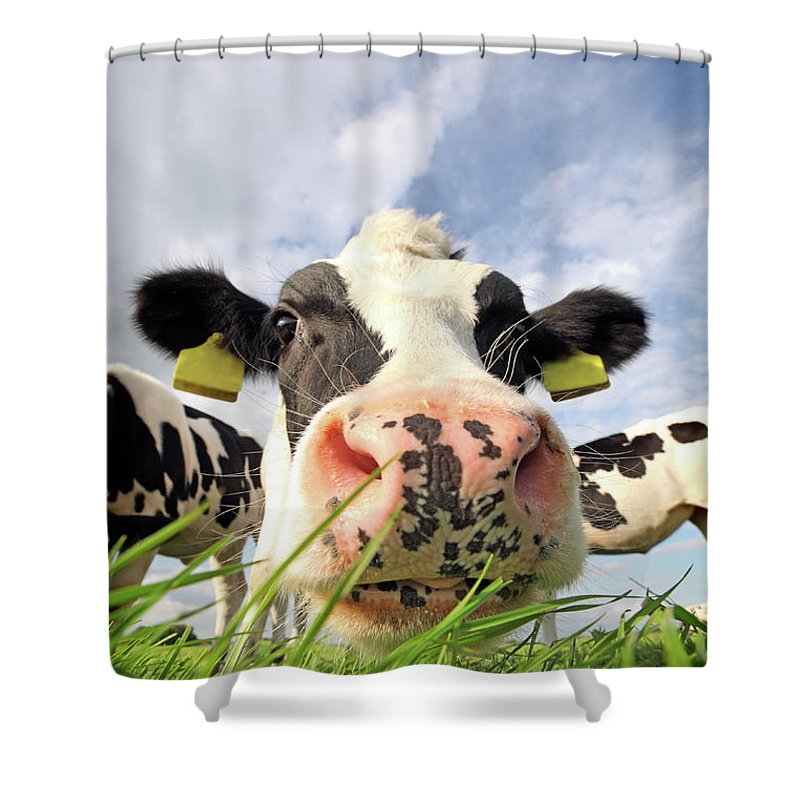 Grass Shower Curtain featuring the photograph Curious Cow by Marcel Ter Bekke