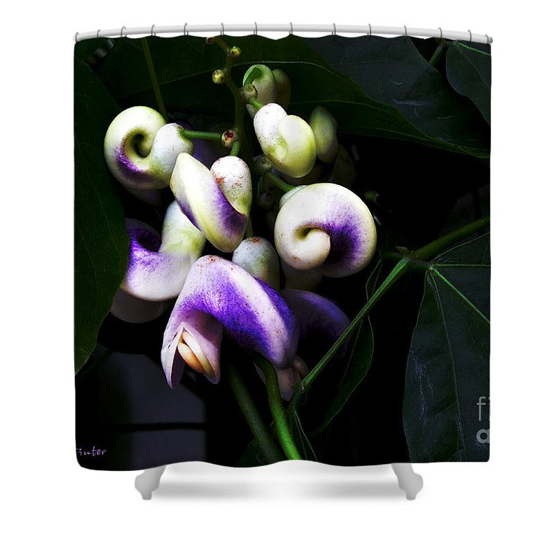 Snail Vine Shower Curtain featuring the photograph Curlicues by RC DeWinter