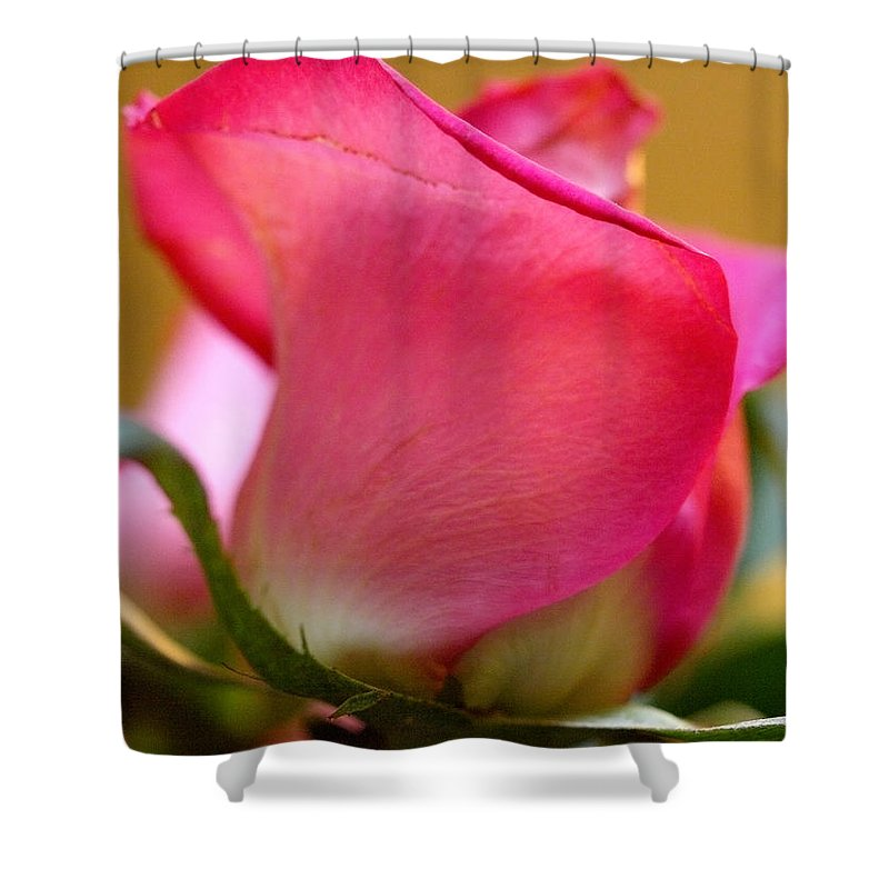 Rose Shower Curtain featuring the photograph Curvy And Beautiful by Teri Schuster