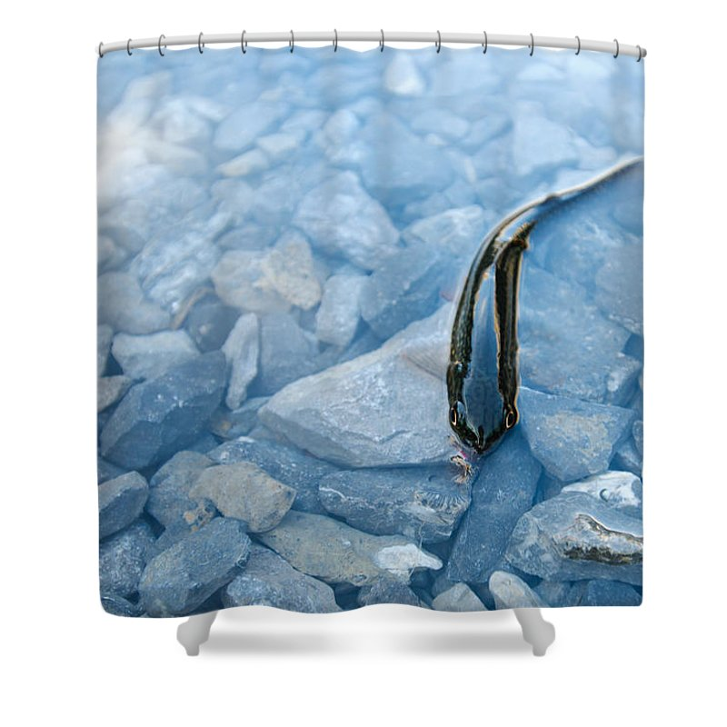 Bait Shower Curtain featuring the photograph Cut-throat Trout by Brandon Smith