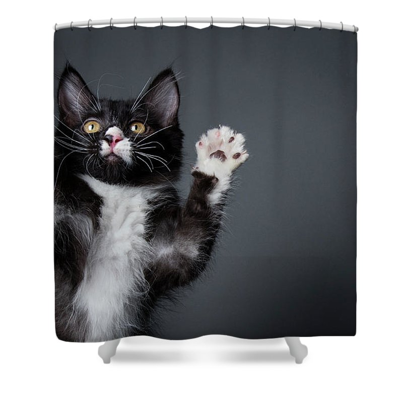Pets Shower Curtain featuring the photograph Cute Kitten Playing - The Amanda by Amandafoundation.org