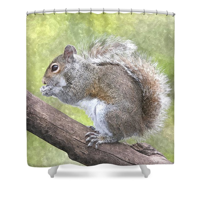 Squirrel Shower Curtain Featuring The Painting Cute By Gianfranco Weiss