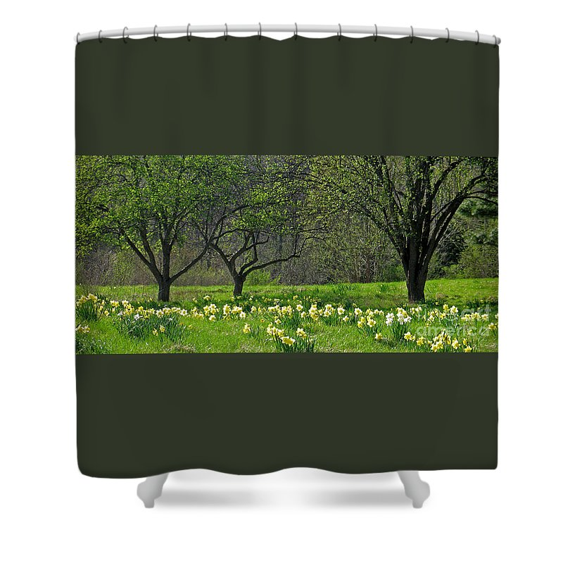 Spring Shower Curtain featuring the photograph Daffodil Meadow by Ann Horn