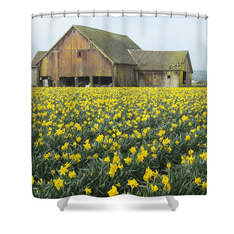 Daffodil Shower Curtain featuring the photograph Daffodils And Barn by Bob Stevens