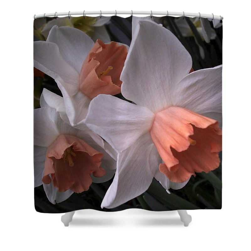 Flower Shower Curtain featuring the photograph Daffodils With Coral Center by Nancy Griswold