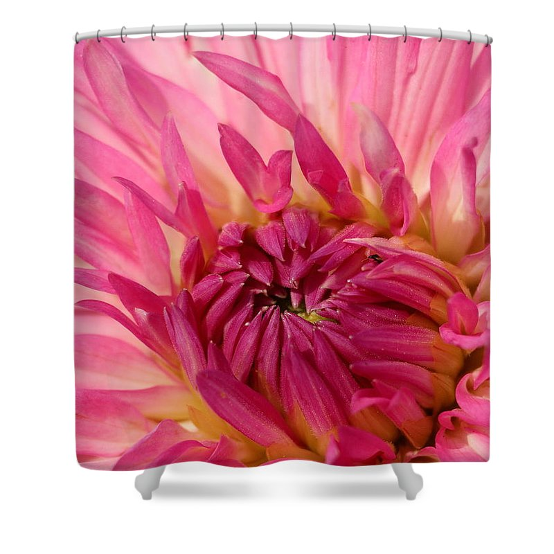 Flower Shower Curtain featuring the photograph Dahlia 2am-104251 by Andrew McInnes