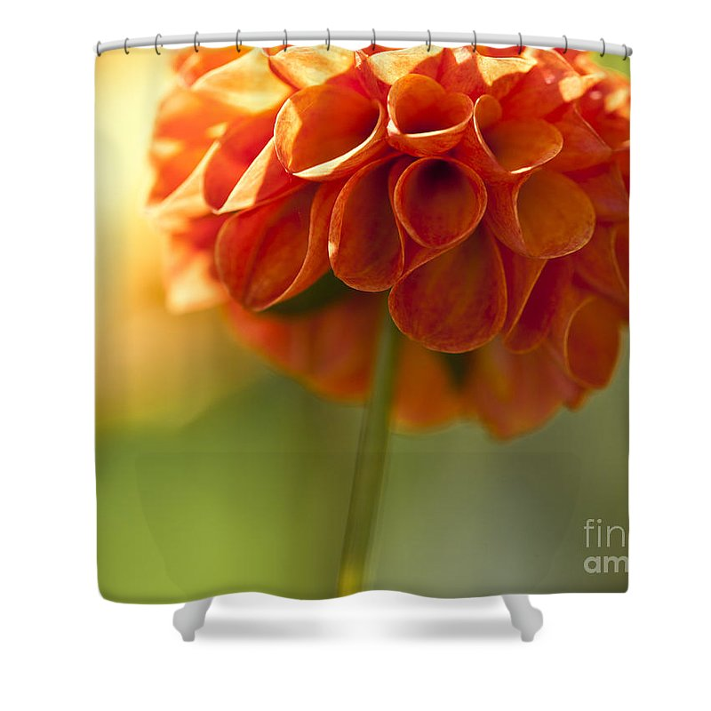 Heiko Shower Curtain featuring the photograph Dahlia Blossom by Heiko Koehrer-Wagner