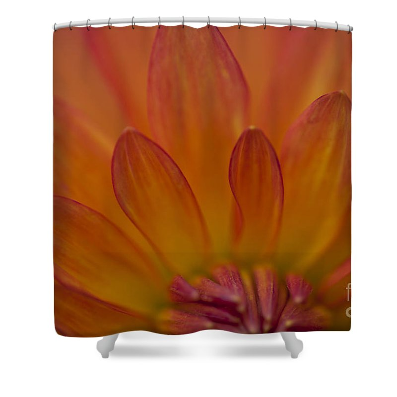 Heiko Shower Curtain featuring the photograph Dahlia Closeup by Heiko Koehrer-Wagner