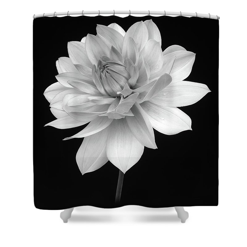 Haslemere Shower Curtain featuring the photograph Dahlia In Gentle Shades Of Grey by Rosemary Calvert