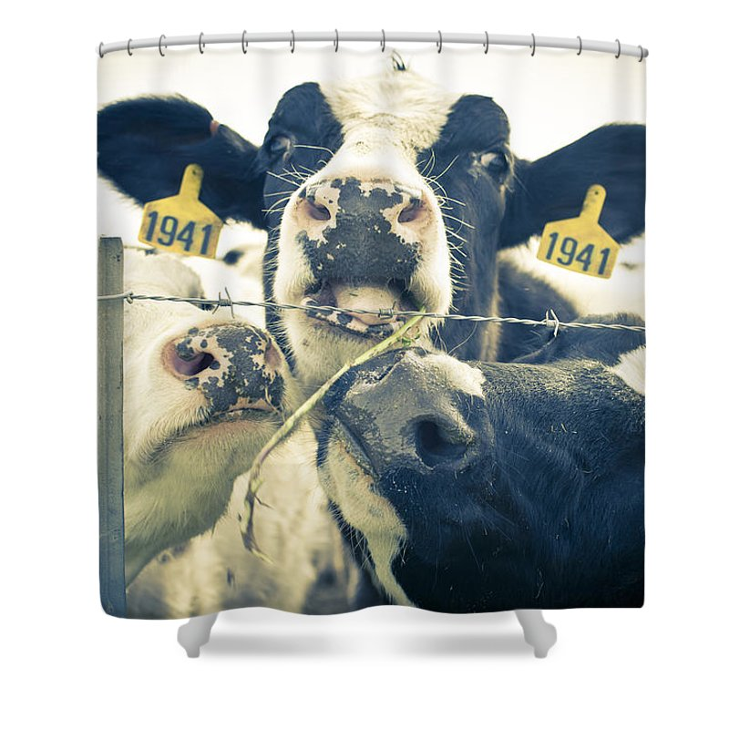 Dairy Cow Portrait Shower Curtain featuring the photograph Dairy Cow Portrait by Priya Ghose