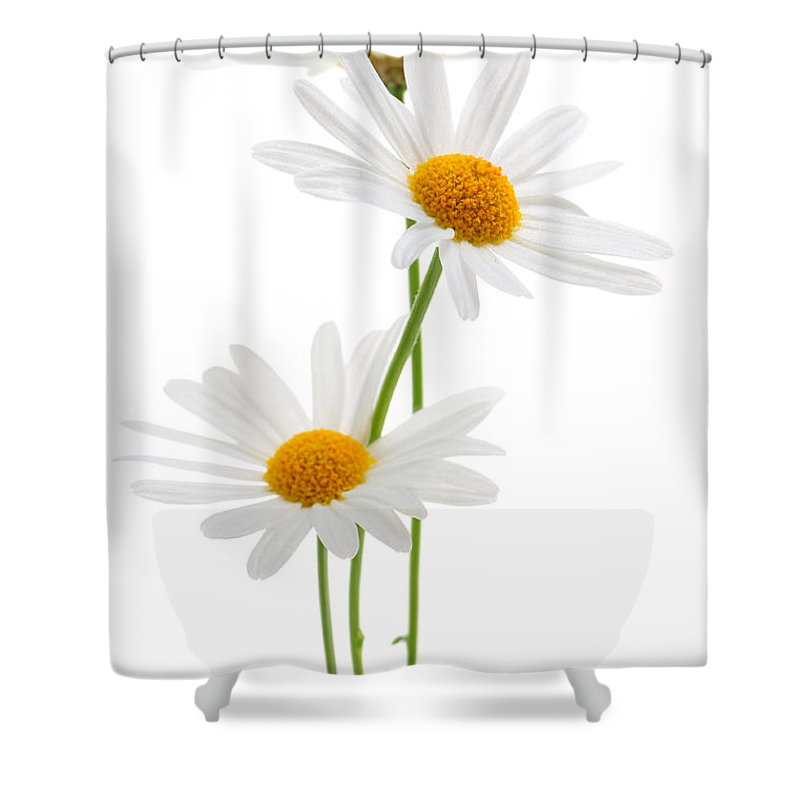 Daisy Shower Curtain featuring the photograph Daisies On White Background by Elena Elisseeva