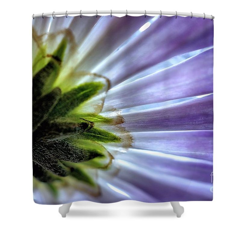 Daisy Shower Curtain featuring the photograph Daisy Petals Abstract Macro by Brian Raggatt