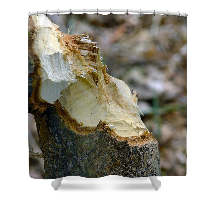 Tree Shower Curtain featuring the photograph Dam Beavers by Brent Dolliver