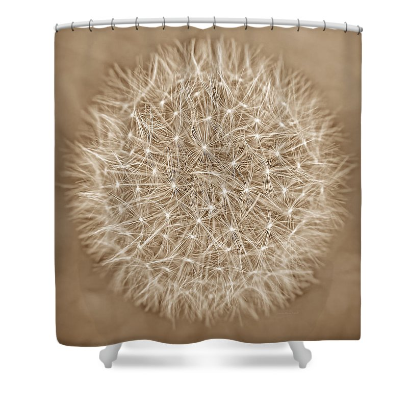 Dandelion Shower Curtain featuring the photograph Dandelion Marco Abstract Brown by Jennie Marie Schell