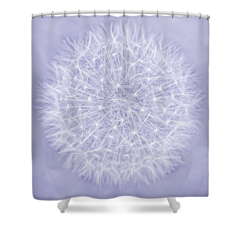 Dandelion Shower Curtain featuring the photograph Dandelion Marco Abstract Lavender by Jennie Marie Schell