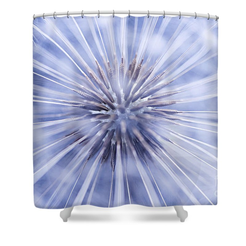 Dandelion Shower Curtain featuring the photograph Dandelion Seeds by Elena Elisseeva