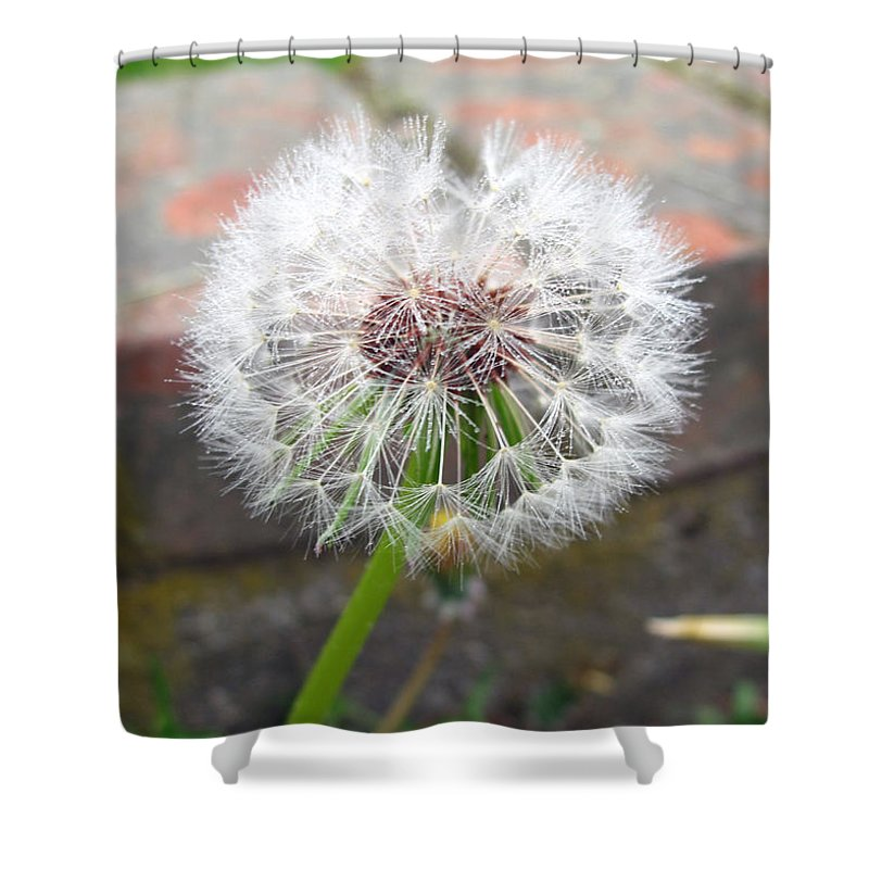 Weed Shower Curtain featuring the photograph Dandelion Tada by Barbara McDevitt