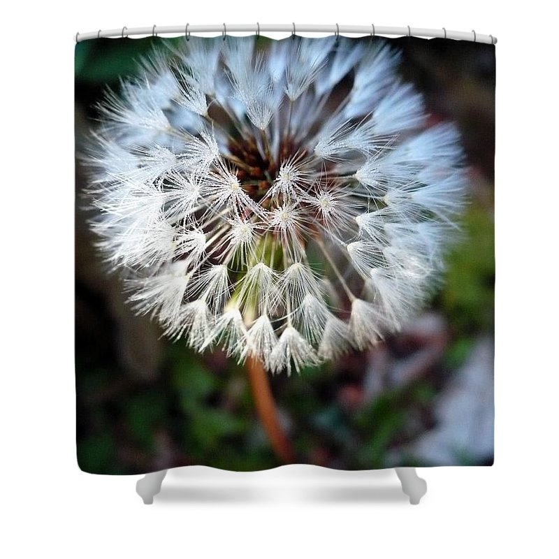 Dandelion Shower Curtain featuring the photograph Dandelion Wish by Nicki Bennett