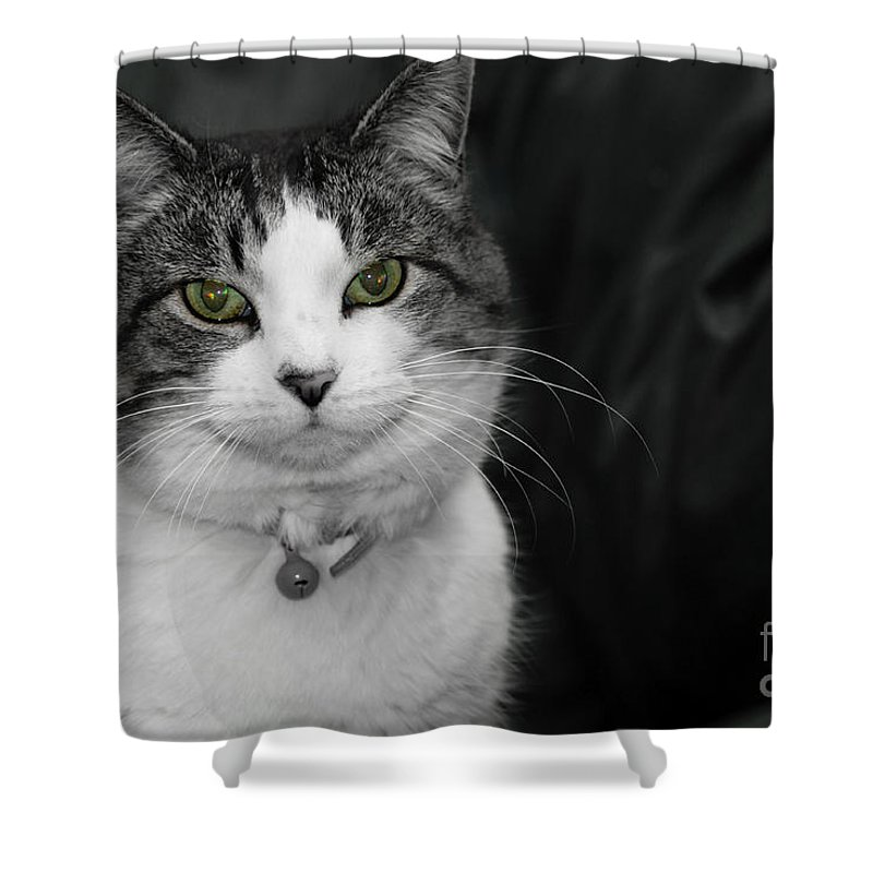 Animal Shower Curtain featuring the photograph Dare To Look Into My Green Eyes by Jennifer White
