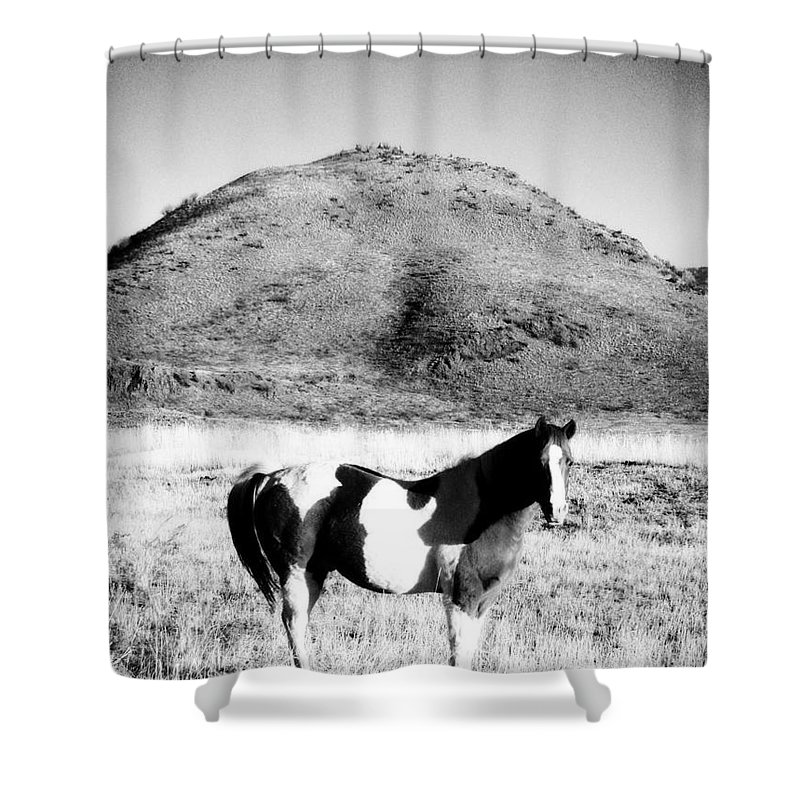 Horse Shower Curtain featuring the photograph Day Moon And Paint by Jamie Johnson