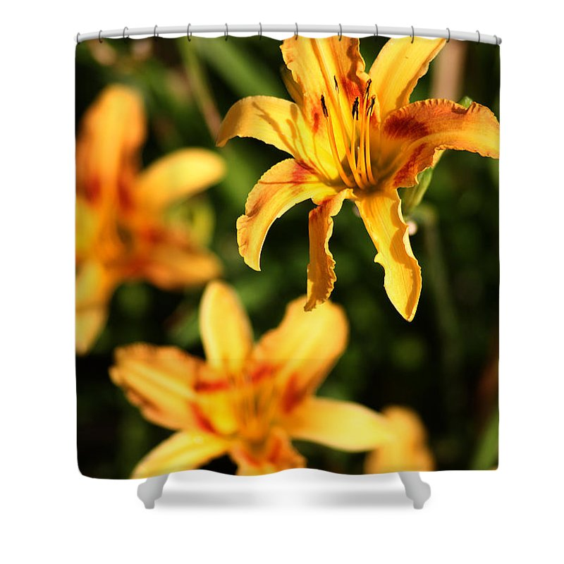 Day Lilly Shower Curtain featuring the photograph Daylillies0107 by Gary Gingrich Galleries