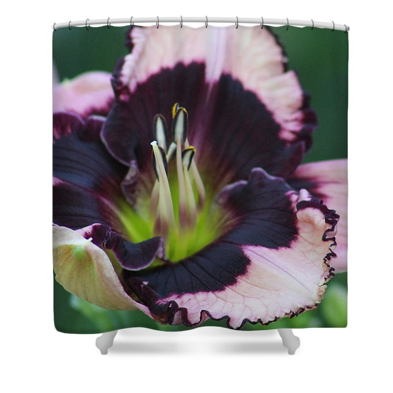 Daylilies Shower Curtain featuring the photograph Daylily 12 by G Berry
