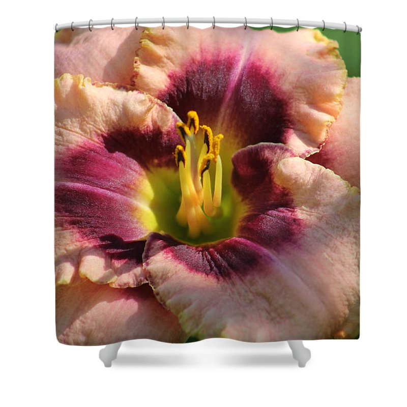 Daylilies Shower Curtain featuring the photograph Daylily Collection # 14 by G Berry