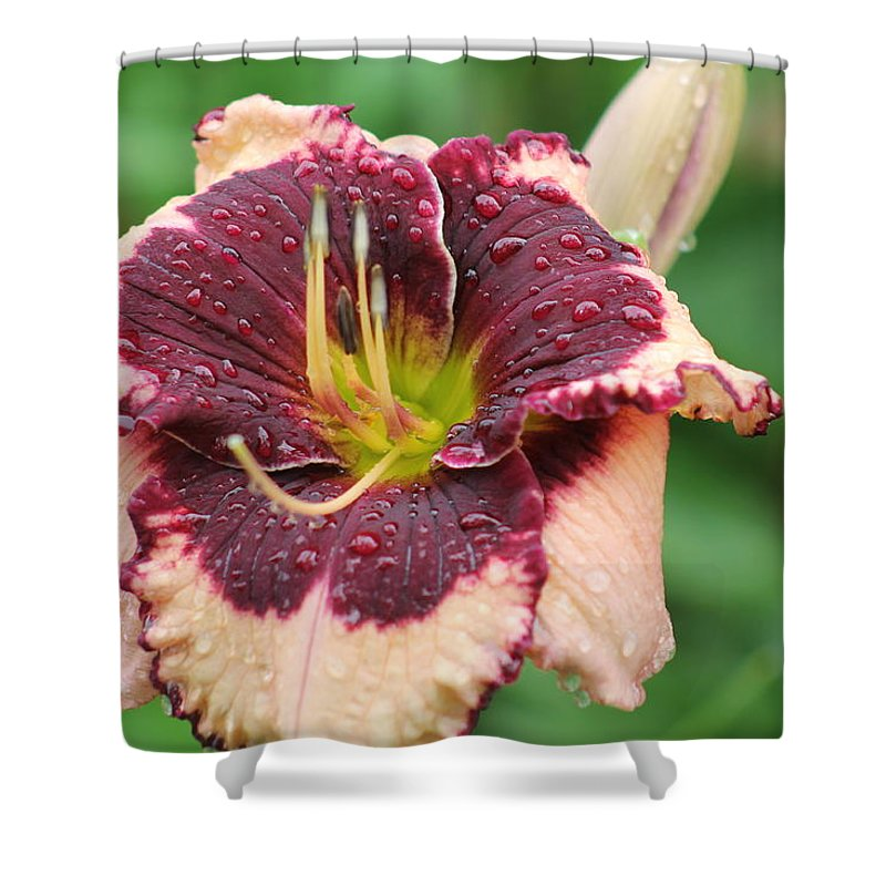 Daylilies Shower Curtain featuring the photograph Daylily Collection # 7 by G Berry
