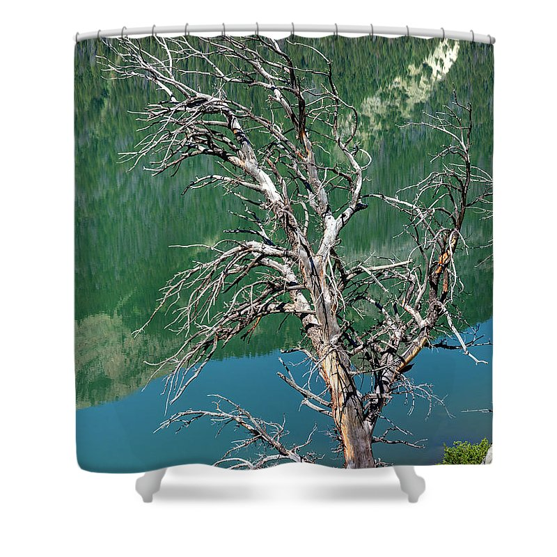 Dead Shower Curtain featuring the photograph Dead Tree At Green River Lakes -wyoming by Gary Whitton