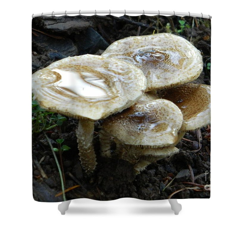 Deadly Beauty 1 Shower Curtain featuring the photograph Deadly Beauty 1 by Chalet Roome-Rigdon
