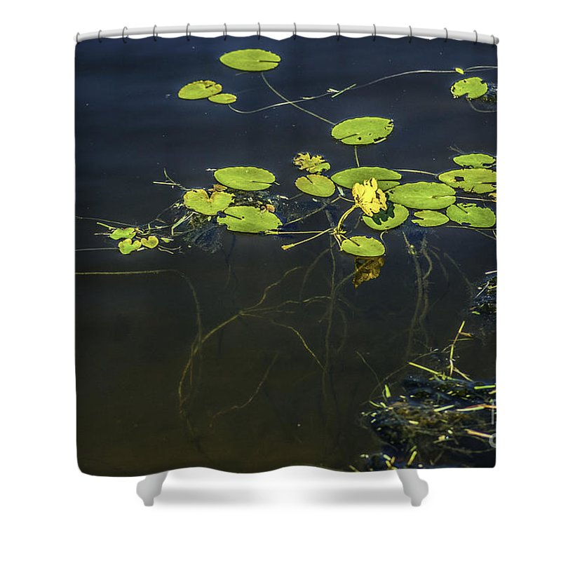 Lilly Pad Shower Curtain featuring the photograph Deep Roots by Dale Powell