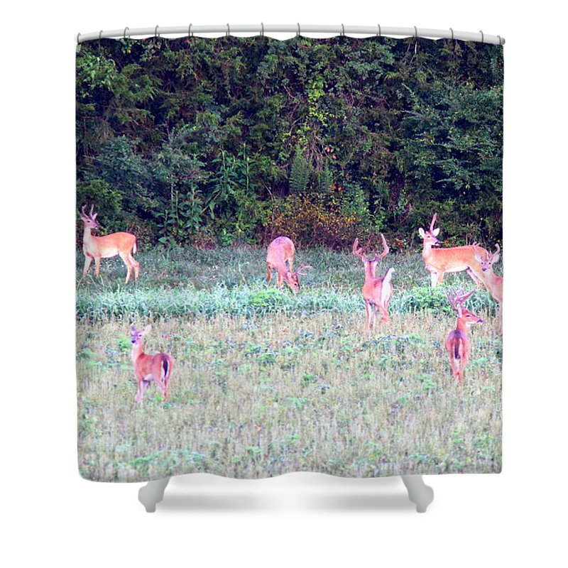 Deer Shower Curtain featuring the photograph Deer-img-0123-020 by Travis Truelove
