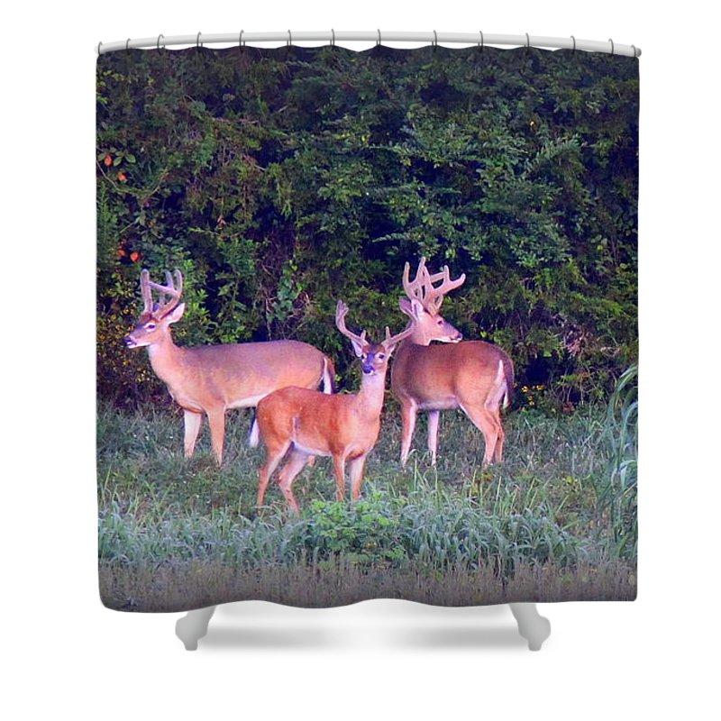 Deer Shower Curtain featuring the photograph Deer-img-0150-001 by Travis Truelove