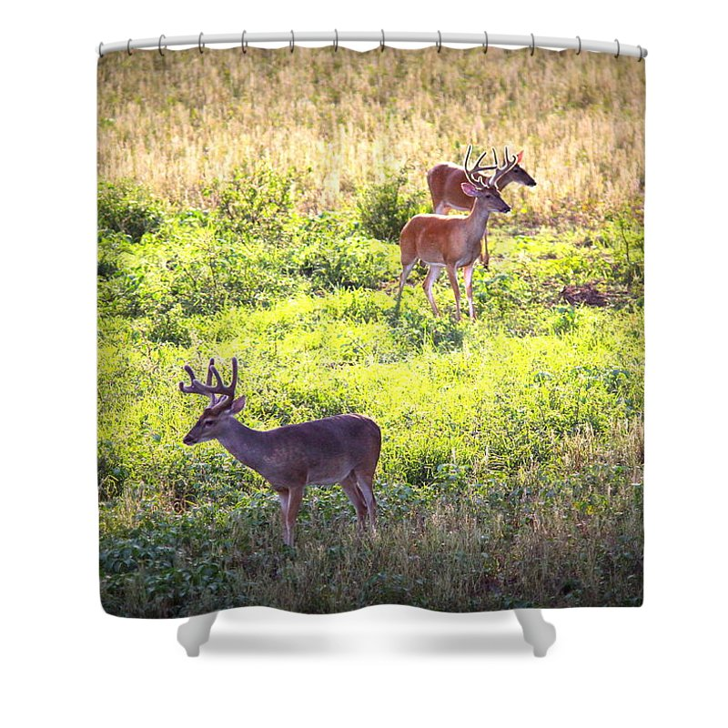 Deer Shower Curtain featuring the photograph Deer-img-0437-001 by Travis Truelove