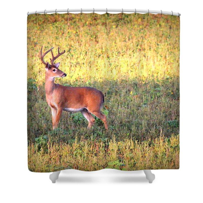 Deer Shower Curtain featuring the photograph Deer-img-0627-002 by Travis Truelove