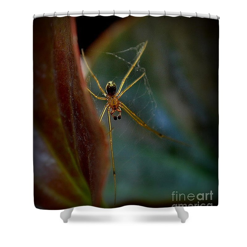 Nature Shower Curtain featuring the photograph Delicate Constructor by Marija Djedovic