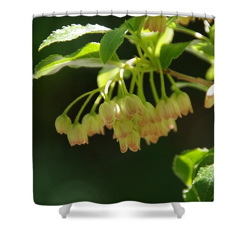 Red Veined Enkianthus Shower Curtain featuring the photograph Delicate Flowers by Marilyn Wilson