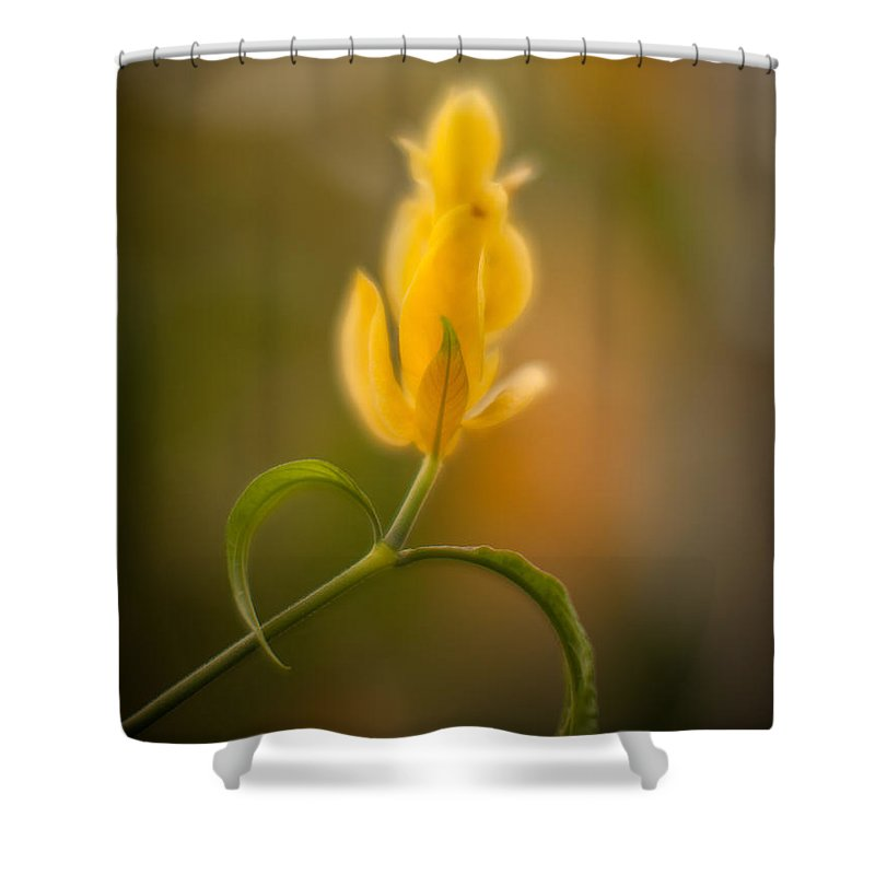 Flower Shower Curtain featuring the photograph Delicate Fountain Of Gold by Mike Reid