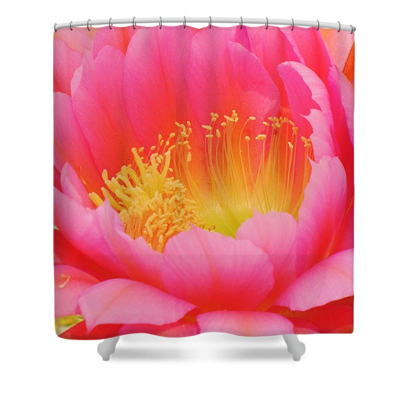 Cactus Flower Shower Curtain featuring the photograph Delicate Pink Cactus Flower by Michelle Cassella
