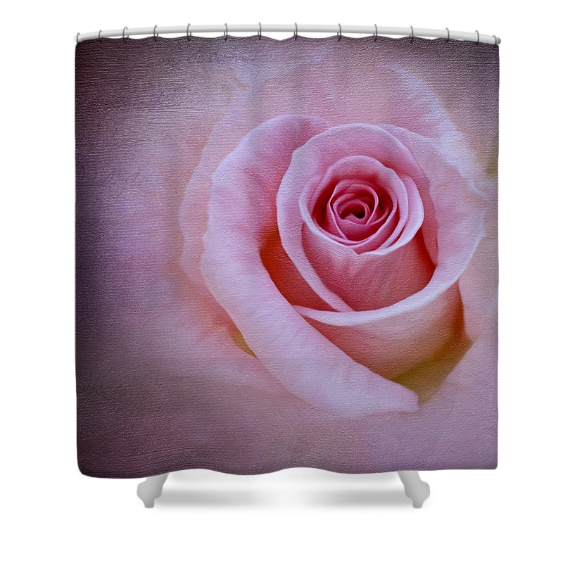 Rose Shower Curtain featuring the photograph Delicately Pink by Ivelina G