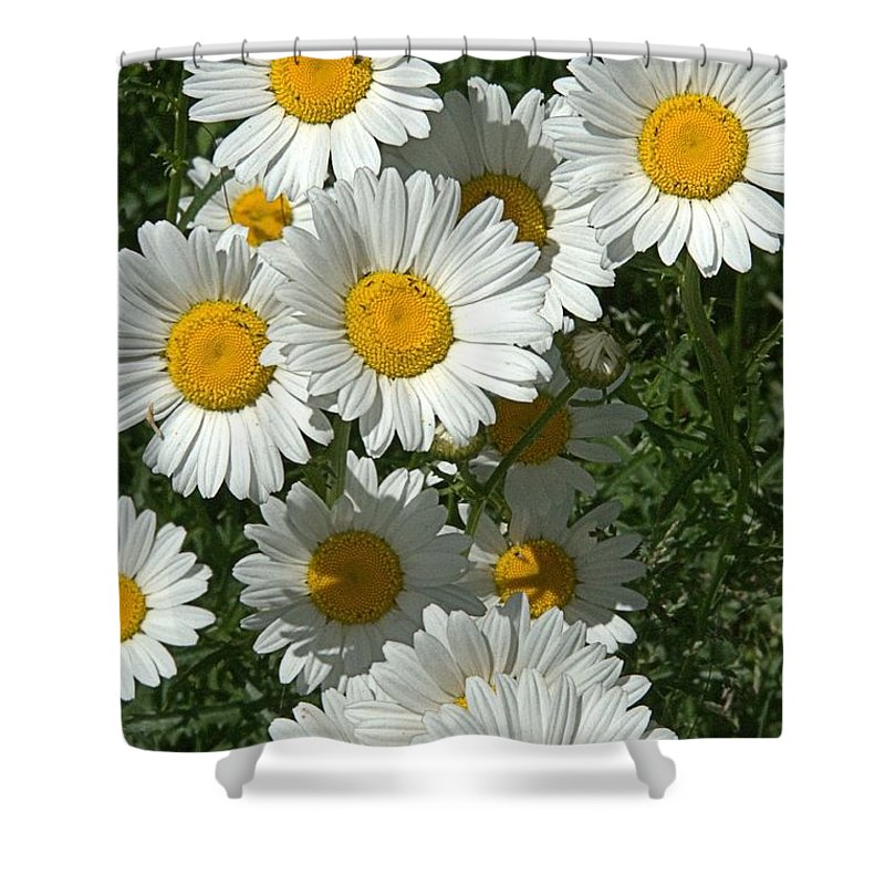 Daisy Shower Curtain featuring the photograph Delightful Daisies by Valerie Kirkwood