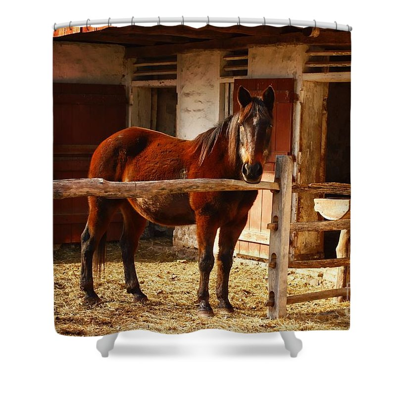 Animal Shower Curtain featuring the photograph Delightful Horse by Marcia Lee Jones