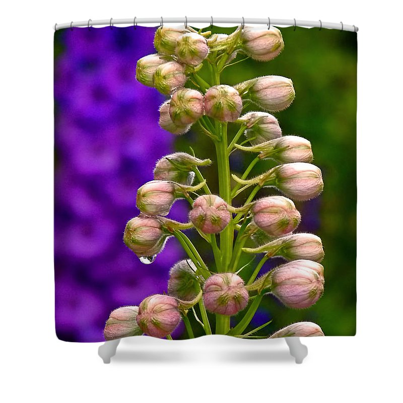 Delphinium Shower Curtain featuring the photograph Delphinium by Rona Black