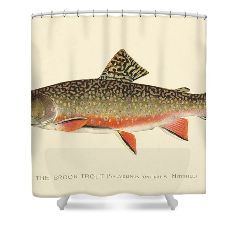 Antique Shower Curtain featuring the painting Denton Brook Trout by Gary Grayson
