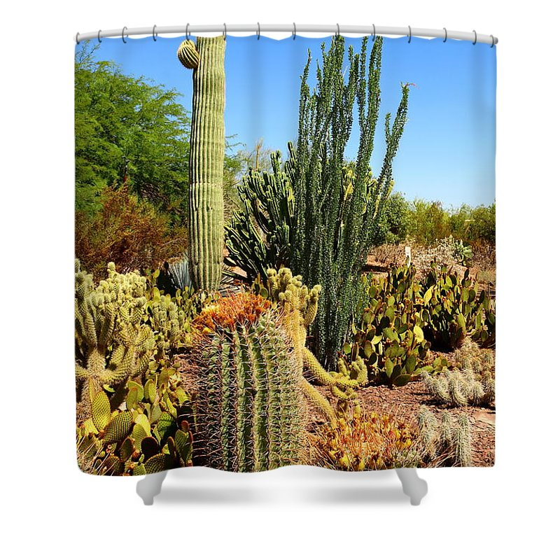 Cactus Shower Curtain featuring the photograph Desert Cacti by Christiane Schulze Art And Photography