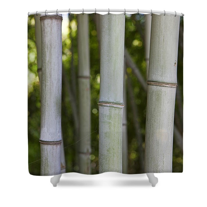 Bamboo Shoot Shower Curtain featuring the photograph Detailed View Of Bamboo Shoots by Jason O Watson