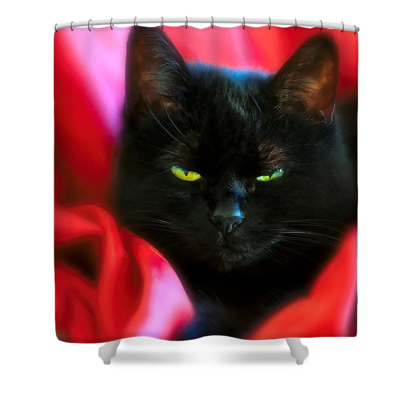 Black Cat Shower Curtain featuring the photograph Devil In A Red Dress by Bob Orsillo