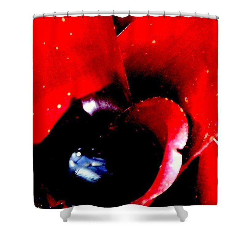 Bromeliad Shower Curtain featuring the photograph Devilish Eye Of The Bromeliad by Antonia Citrino