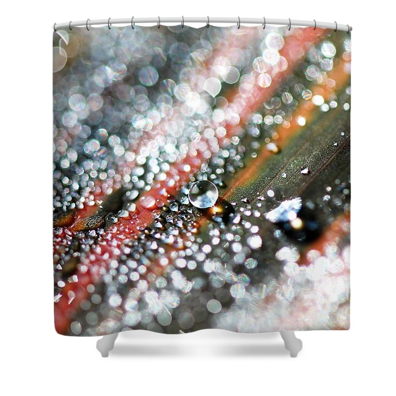 Mccombie Shower Curtain featuring the photograph Dewdrops On Durban by J McCombie